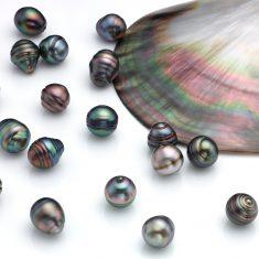 Lote de Perlas tahiti circulo multicolor